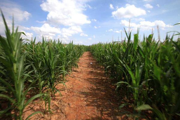 GMO Quiz | Food, Inc  | POV | PBS